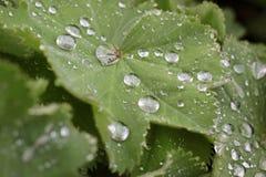 Regentropfen auf grünem Blatt Lizenzfreies Stockbild