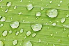 Regentropfen auf grünem Blatt des Irisabschlusses oben Lizenzfreie Stockfotos