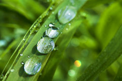 Regentropfen auf grünem Gras Lizenzfreie Stockfotografie