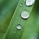 Regentropfen auf grünem Gras Lizenzfreies Stockfoto