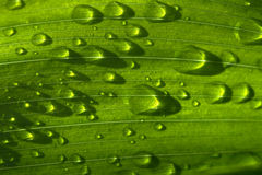 Regentropfen auf grünem Gras Stockbild
