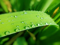 Regentropfen auf grünem Gras Stockfotografie