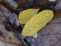 Regentropfen auf grünen Blättern über nass braunen Blättern stockfotografie