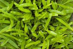Regentropfen auf grünen Blättern Lizenzfreies Stockfoto