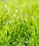 Regentropfen auf Gras. Lizenzfreies Stockfoto