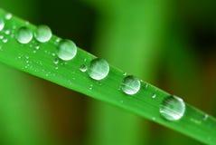 Regentropfen auf Gras Lizenzfreie Stockfotografie