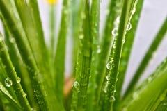 Regentropfen auf Gras Stockbild