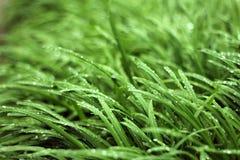 Regentropfen auf Gras Lizenzfreie Stockfotos