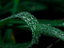 Regentropfen auf Gras stockfotografie