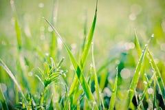 Regentropfen auf Grashalmen Stockbilder