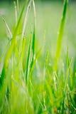 Regentropfen auf Grashalmen Lizenzfreie Stockfotos