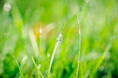 Regentropfen auf Grashalmen Stockfoto