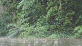 Regentropfen aus den Grund stock footage