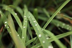 Regentropfen in der Natur II Stockfotografie