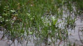 Regentropfen der Pfütze stock video