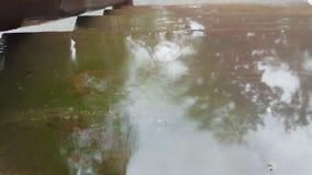 Regentropfen, die in der flachen reflektierenden Pfütze spritzen stock video footage