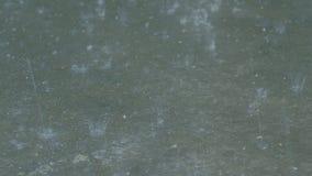 Regentropfen, die Natur des schlechten Wetters des Asphalts spritzen stock video footage