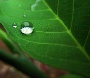 Regentropfen eines Blattes Stockbild