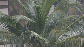 Regentropfen fließen unten auf Palmblätter Tropischer Regen in den asiatischen Ländern stock video footage