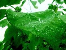 Regentropfen halten zu fallen Stockfotografie