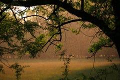 Regentropfen im Wald an einem sonnigen Tag Stockbilder
