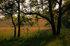 Regentropfen im Wald an einem sonnigen Tag Stockfotografie