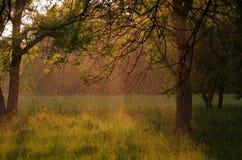 Regentropfen im Wald an einem sonnigen Tag Lizenzfreies Stockfoto