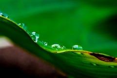 Regentropfen am Rand eines Blattes Stockfotos