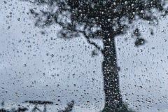 Regentropfen und großer Baum lizenzfreie stockfotos