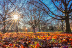 Regents park in autumn Stock Images