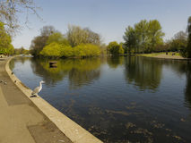 Regents Park lake Royalty Free Stock Photos