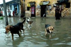 Regenursachenwasser, das Kolkata anmeldet Stockbild