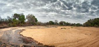 Regenval in Kruger Royalty-vrije Stock Foto's