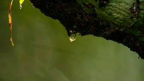 Regenvaldruppeltje op groene bladeren stock fotografie