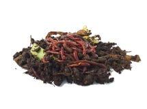 Regenwürmer im Kompost lizenzfreie stockbilder