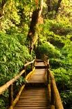 Regenwald stockfotos