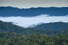 Regenwald Stockfotografie