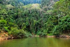 Regenwald Stockbild