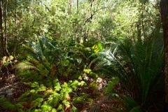 Regenwald auf Fraser Island Stockfotografie