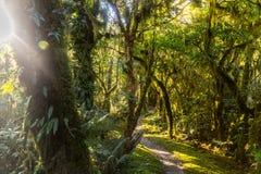Regenwald auf Milford-Bahn in Neuseeland mit Sonne strahlt das Glänzen durch das Laub aus stockbilder