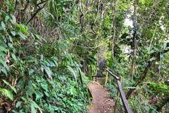 Regenwald in Brasilien Lizenzfreie Stockbilder