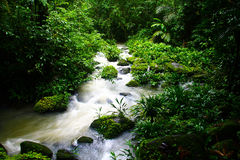 Regenwald-Fluss Lizenzfreies Stockfoto