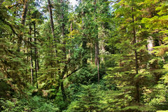 Regenwald im Britisch-Columbia, Kanada Lizenzfreies Stockbild
