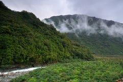 Regenwald im Otira Tal, Arthurs Durchlauf NP Stockbilder