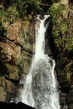 Regenwald-Kaskade stockbilder