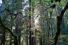 Regenwald-Licht Stockfoto
