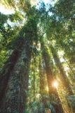 Regenwald Nationalparks Dorrigo, New South Wales, Australien lizenzfreie stockfotografie