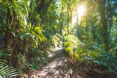 Regenwald Nationalparks Dorrigo, New South Wales, Australien lizenzfreie stockfotos