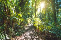 Regenwald Nationalparks Dorrigo, New South Wales, Australien Lizenzfreies Stockfoto
