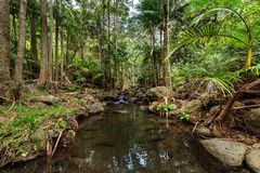 Regenwald-Nebenfluss 2 Lizenzfreies Stockfoto